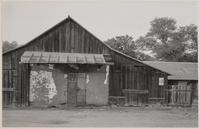 Adobe wall with barn built around it, Hornitos, Mariposa County, California
