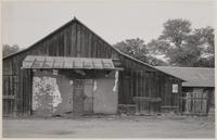 Adobe wall with barn built around it, Hornitos, Mariposa County, California