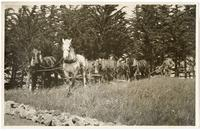 Team of horses and a farmer plowing a field