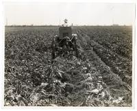Agricultural laborer operating a