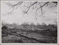 Abandoned walnut orchard, El Monte