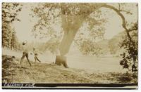 Falling oak