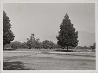 Lemon orchard at East Orange Grove and North Hill Avenue, Pasadena