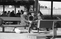 Three guys on a bench in Portsmouth Square with men playing board games in background