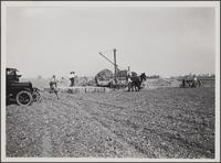 Compressing of lima bean hay at National Boulevard